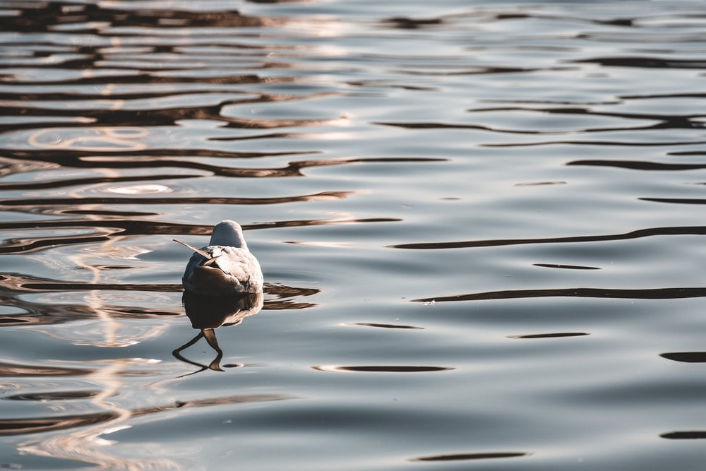 white and black bird on water during daytime