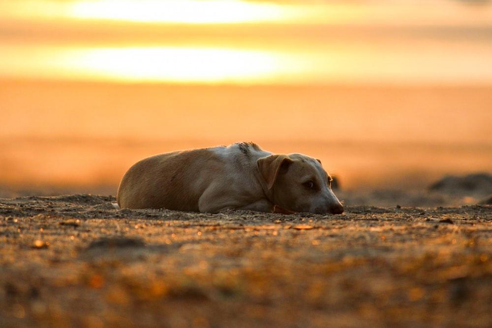 brown short coat medium sized dog lying on ground during daytime