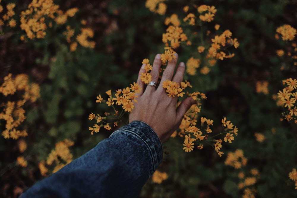 person in blue denim jeans holding yellow flowers
