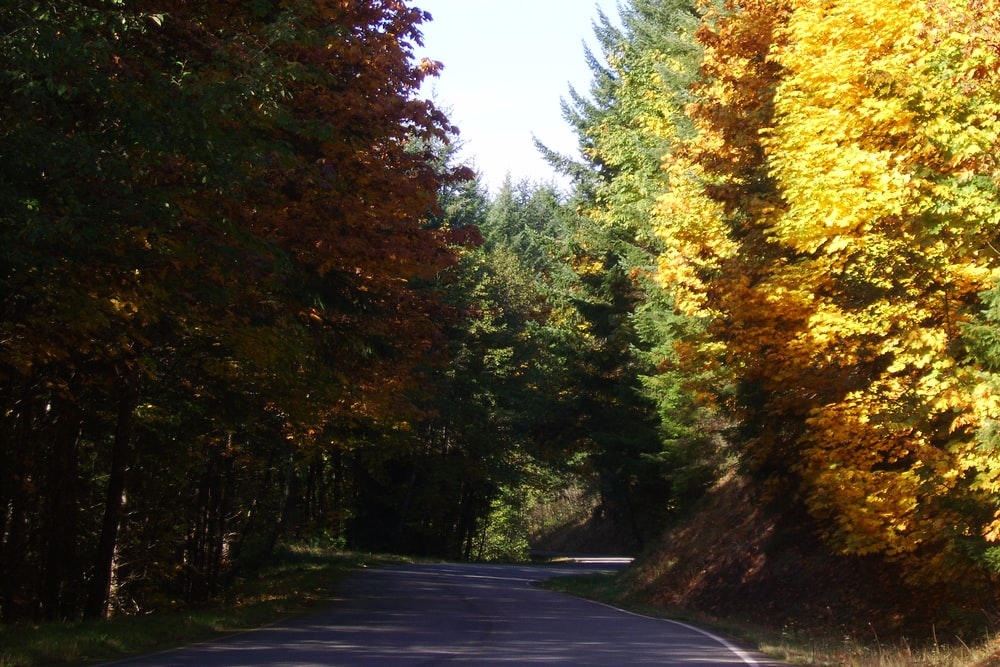 gray concrete road between green and yellow trees during daytime