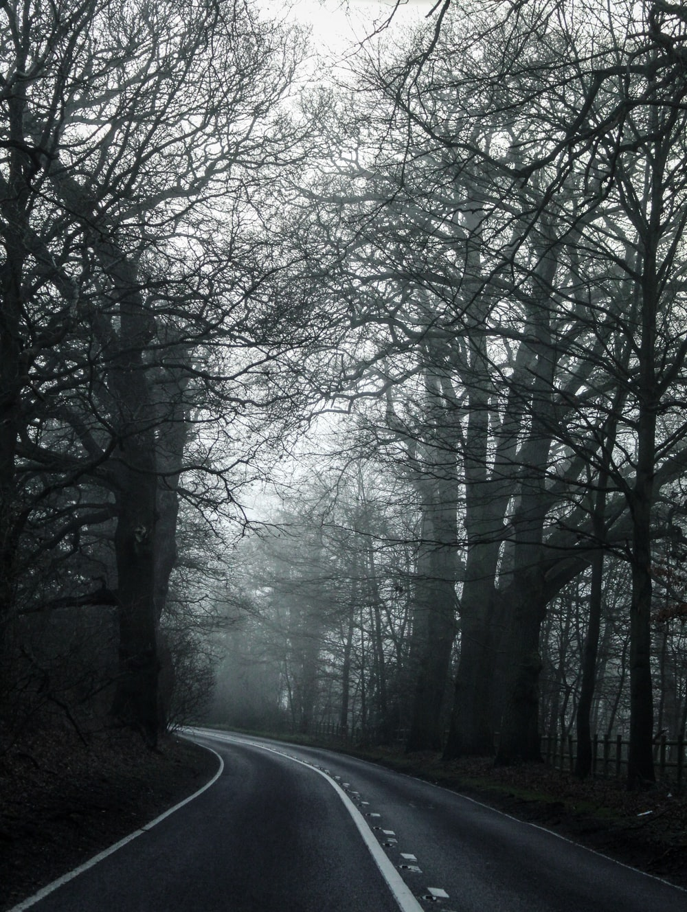 gray asphalt road between bare trees