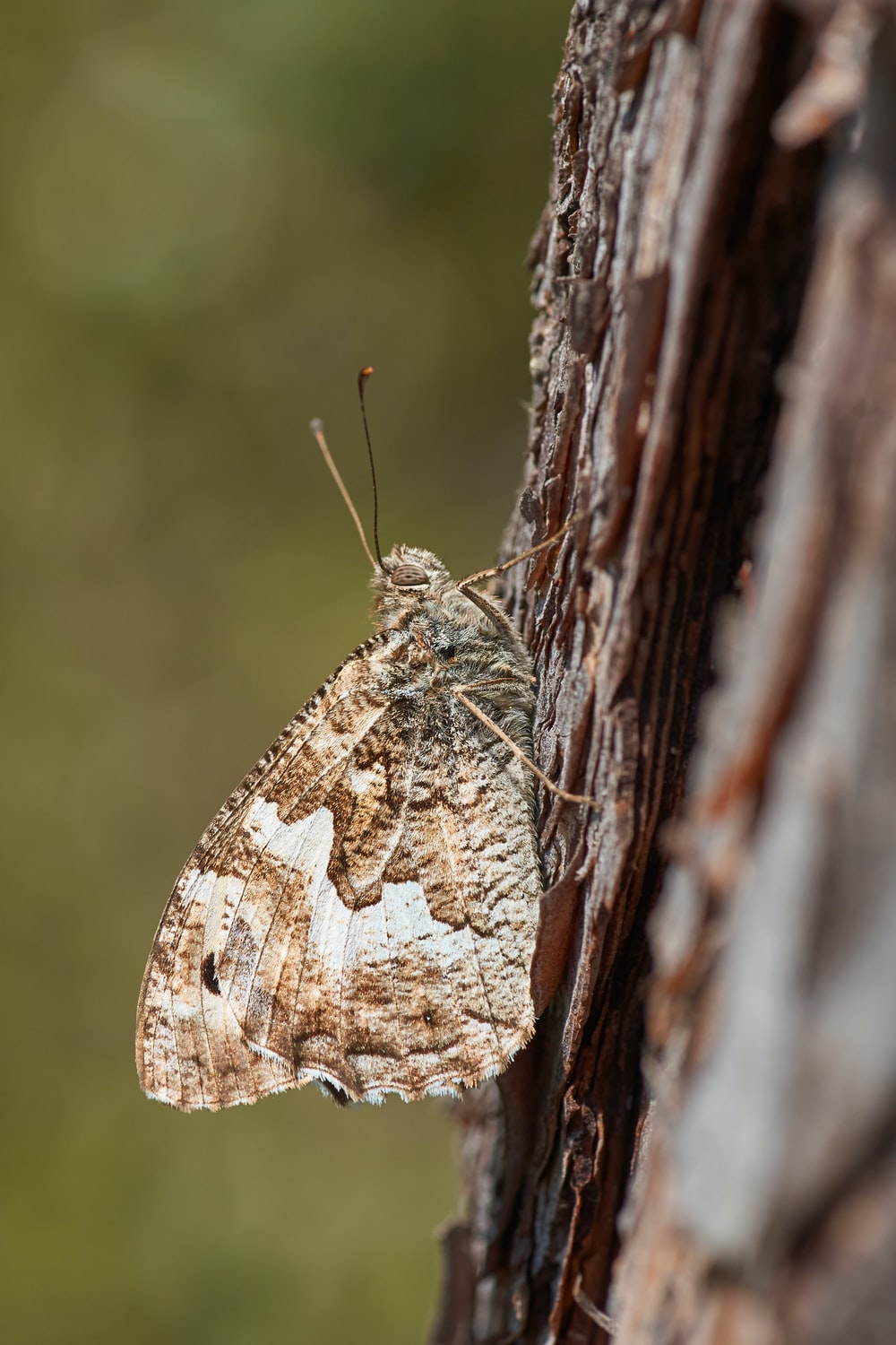brown and white butterfly perched on brown wood