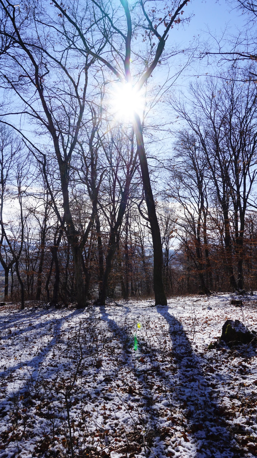 bare trees on snow covered ground during daytime