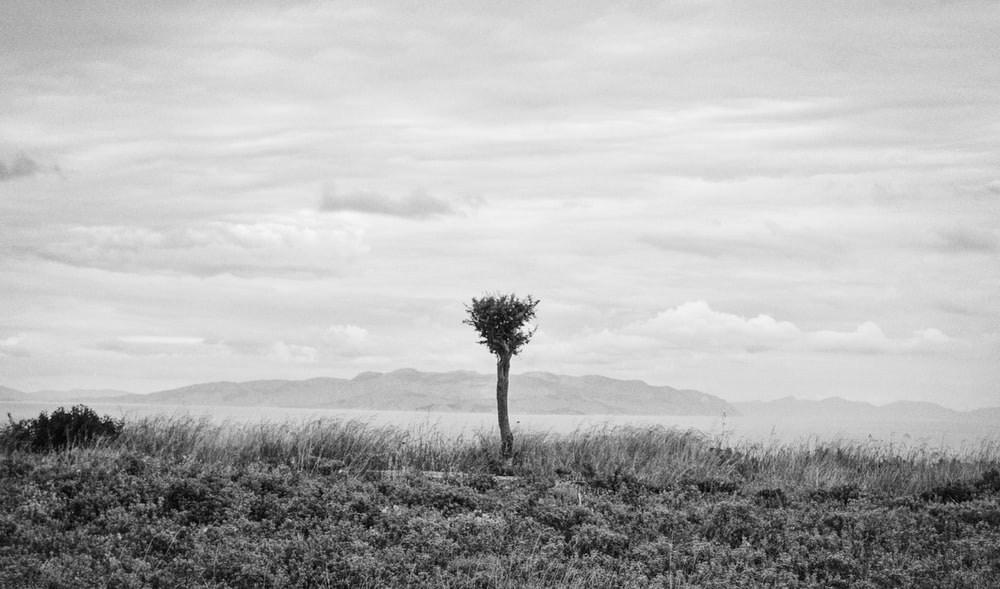 grayscale photo of tree on grass field
