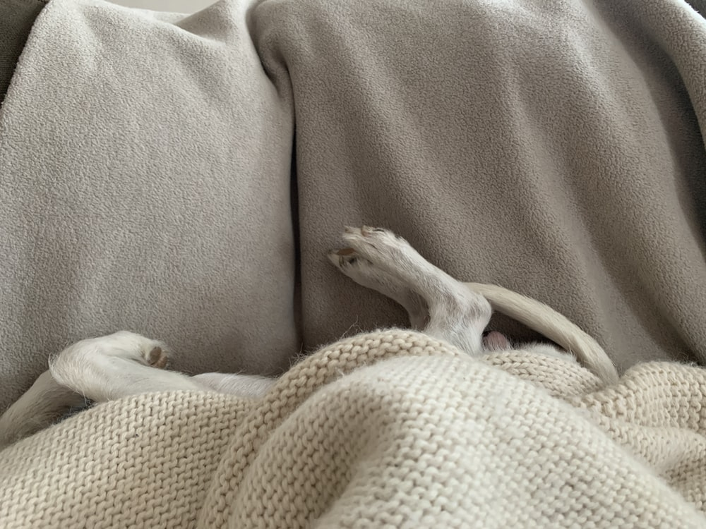 white short coated dog lying on brown textile