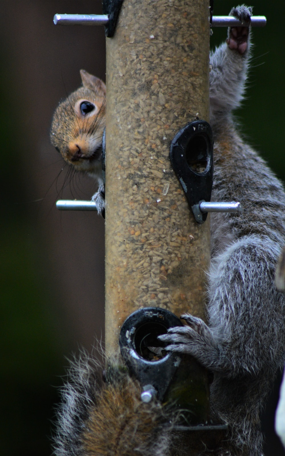 brown squirrel on brown wooden stick during daytime