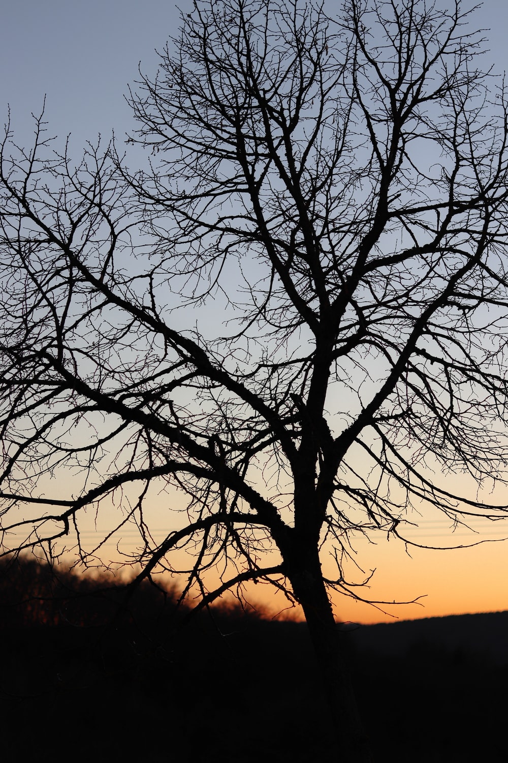leafless tree during golden hour