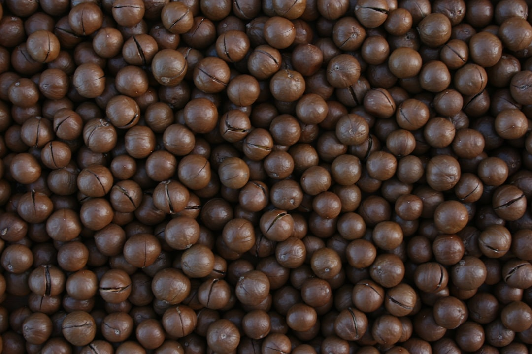Continuous background macadamia nuts