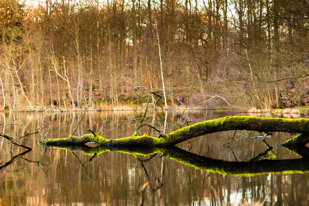 brown tree branch on body of water during daytime