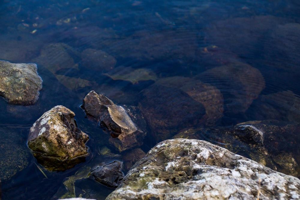 brown and gray rocks on water