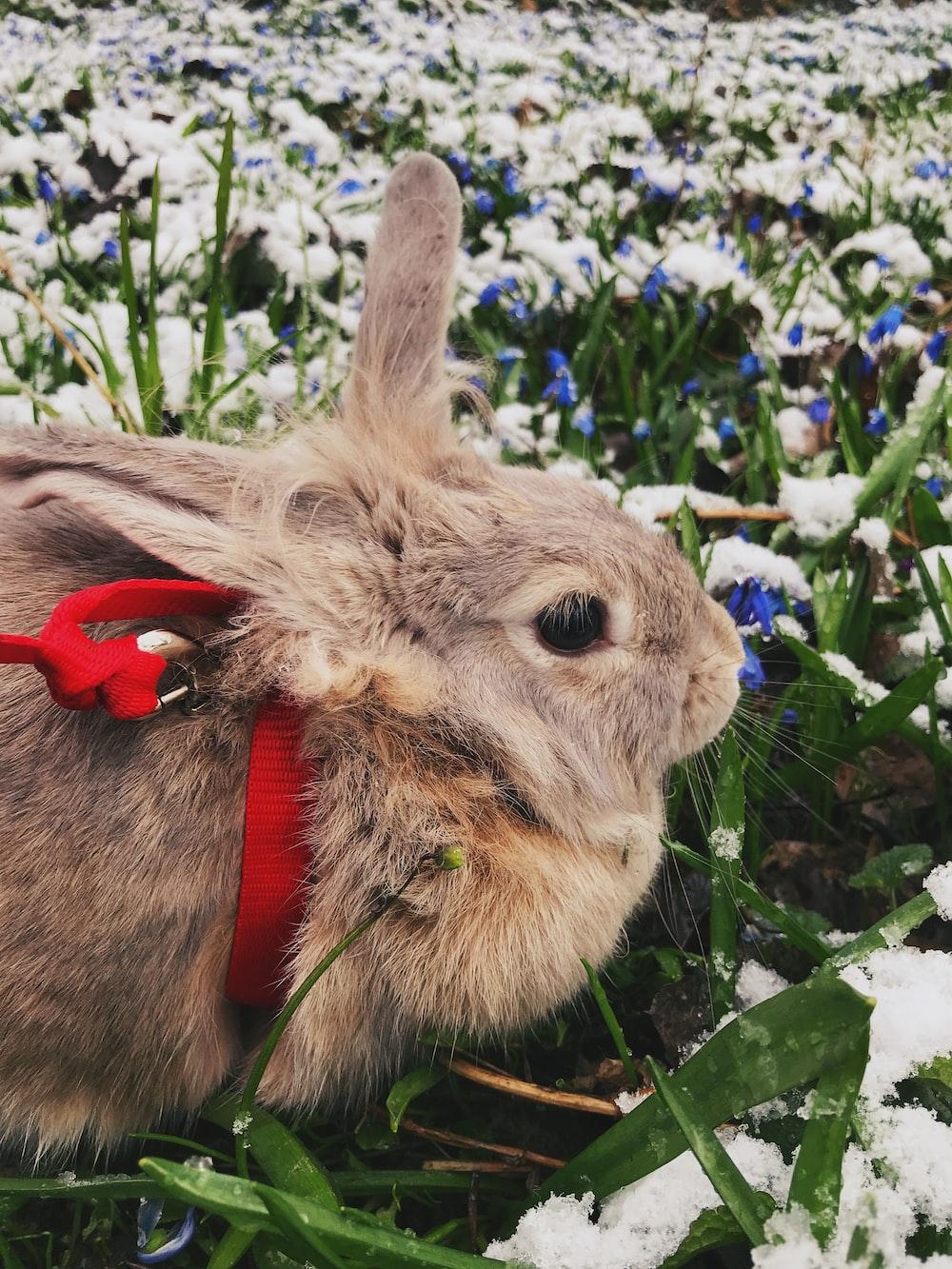 brown rabbit on blue flowers