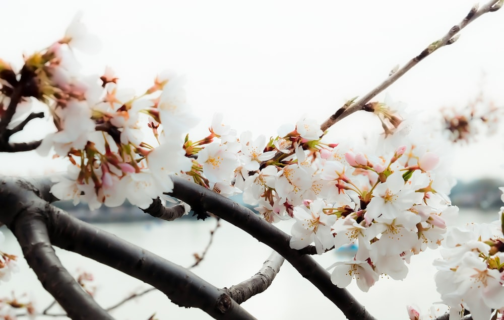white and yellow flowers on brown tree branch