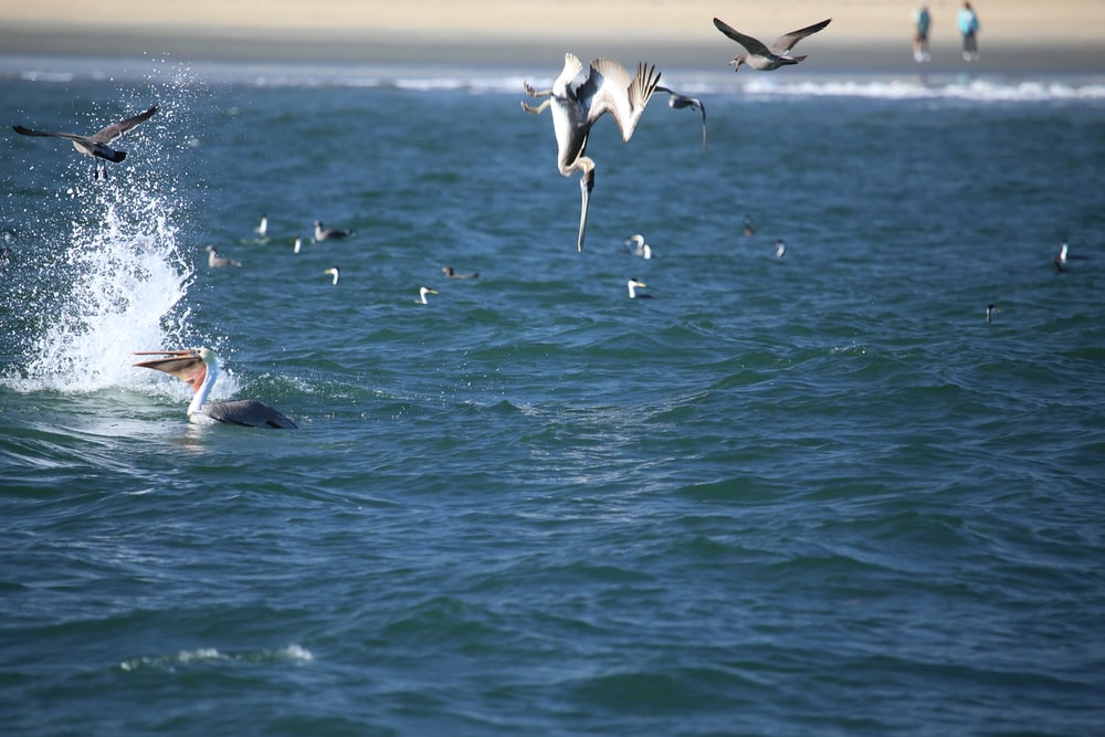 white and black birds flying over the sea during daytime