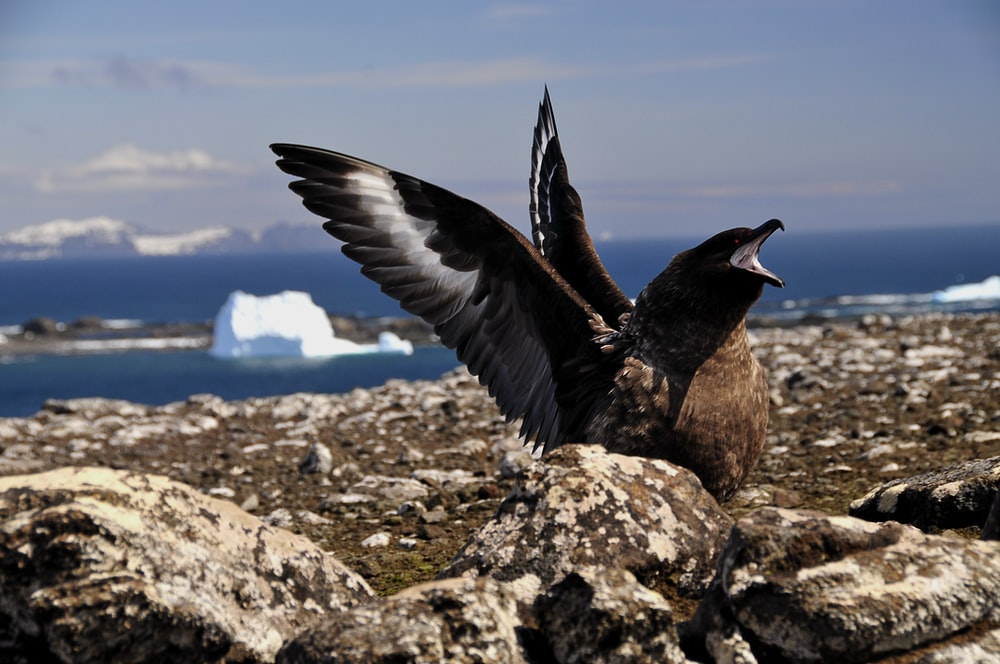 black and white bird flying over the brown rocky shore during daytime