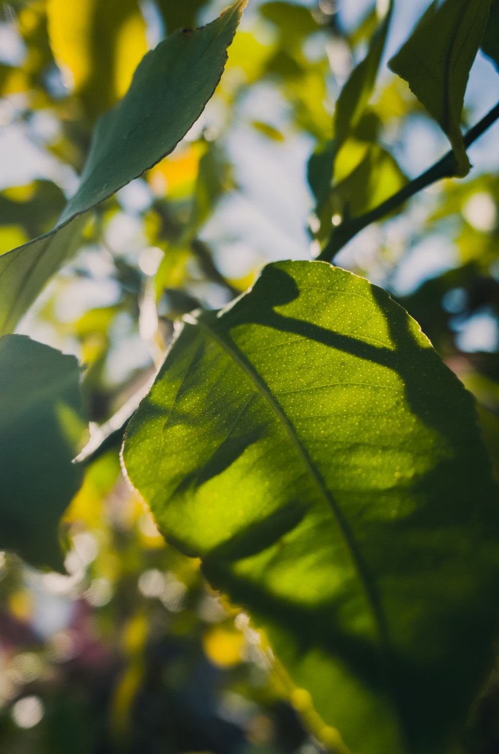 green leaves in tilt shift lens