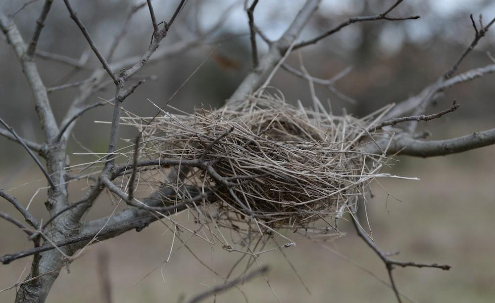 brown bird nest on brown tree branch