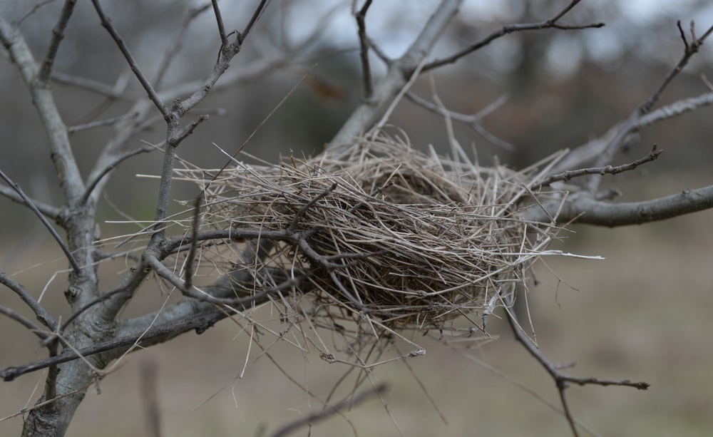 brown bird nest on brown tree branch
