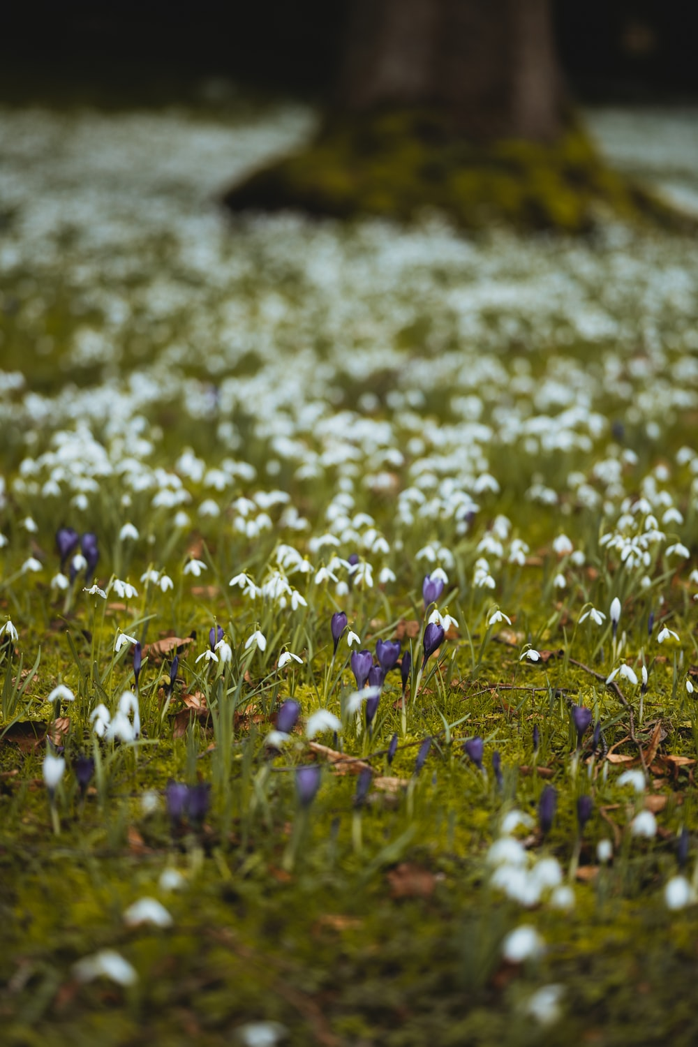 blue and white flowers on green grass field during daytime