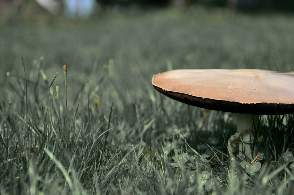 brown wooden round table on green grass during daytime