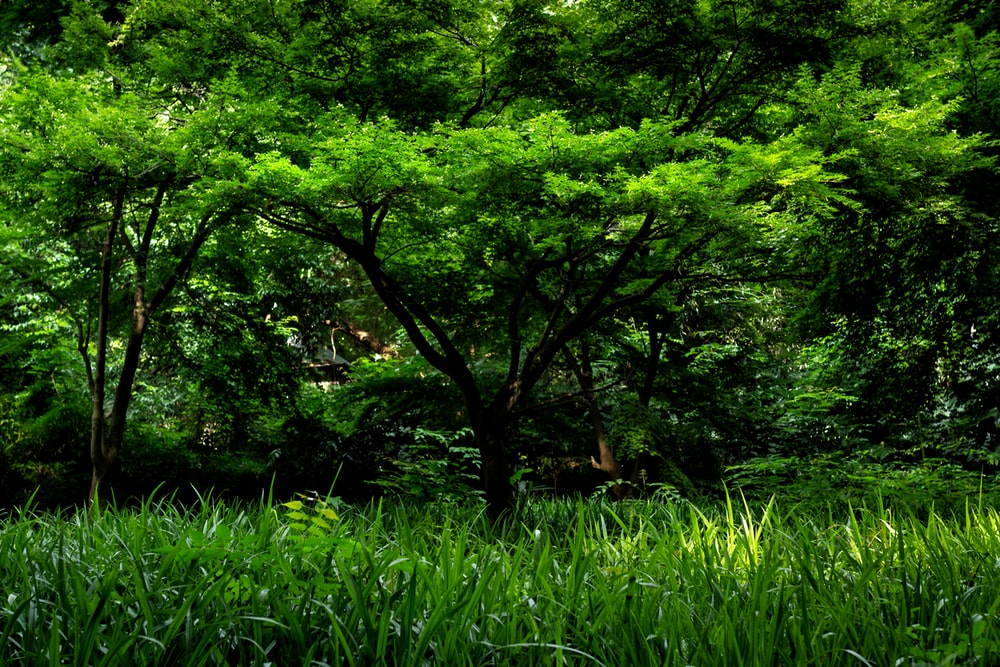 green trees and green grass during daytime