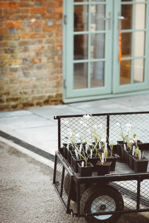 white flowers on black wooden table