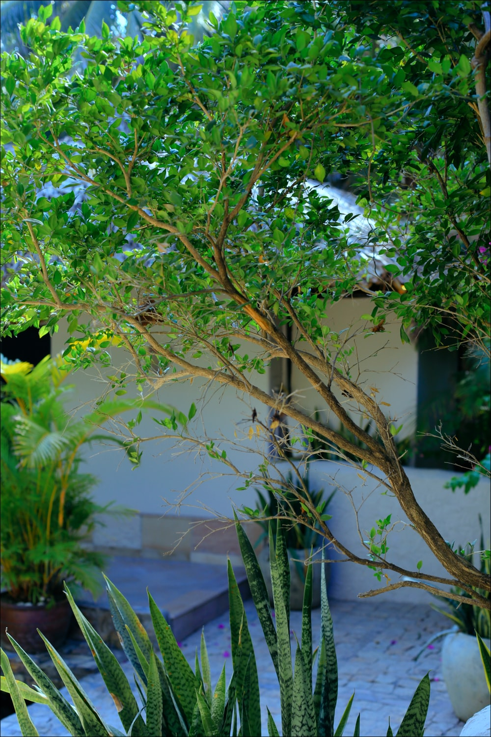green tree near white concrete building during daytime
