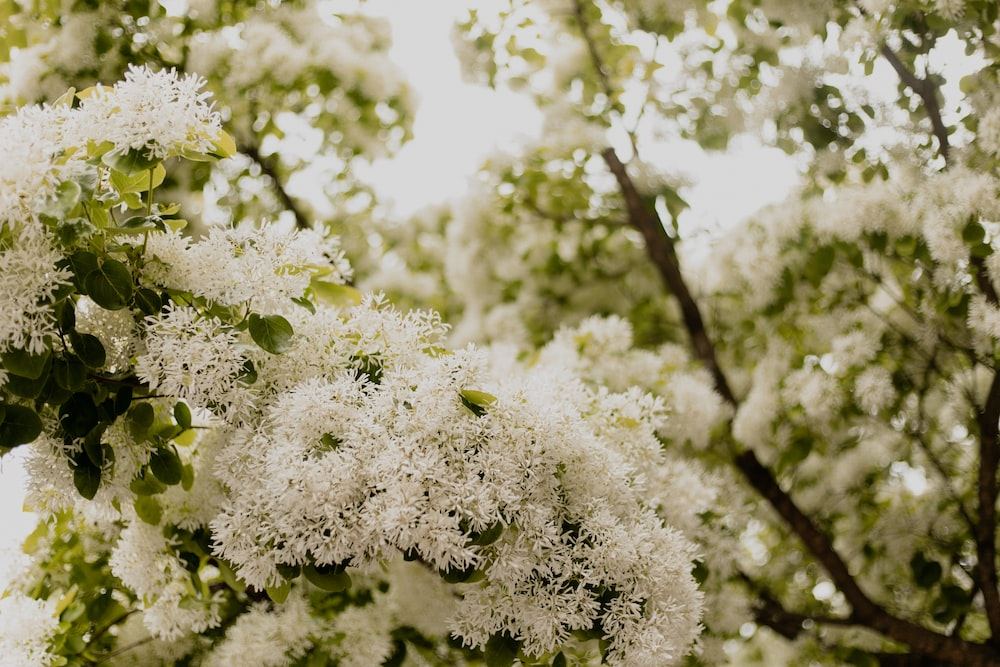 white flowers on brown tree branch during daytime
