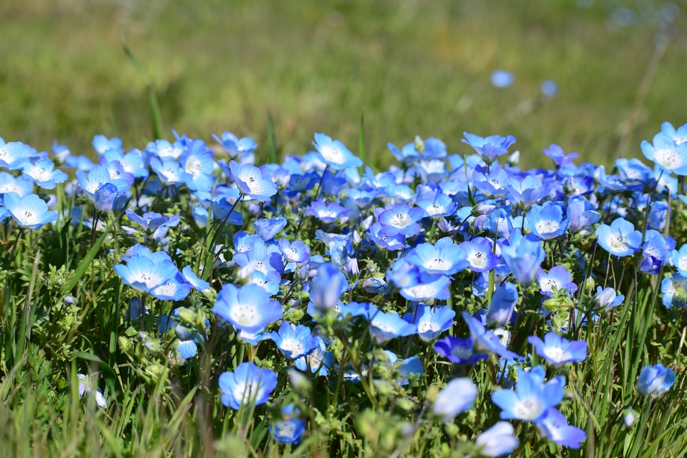 blue flowers on green grass field during daytime