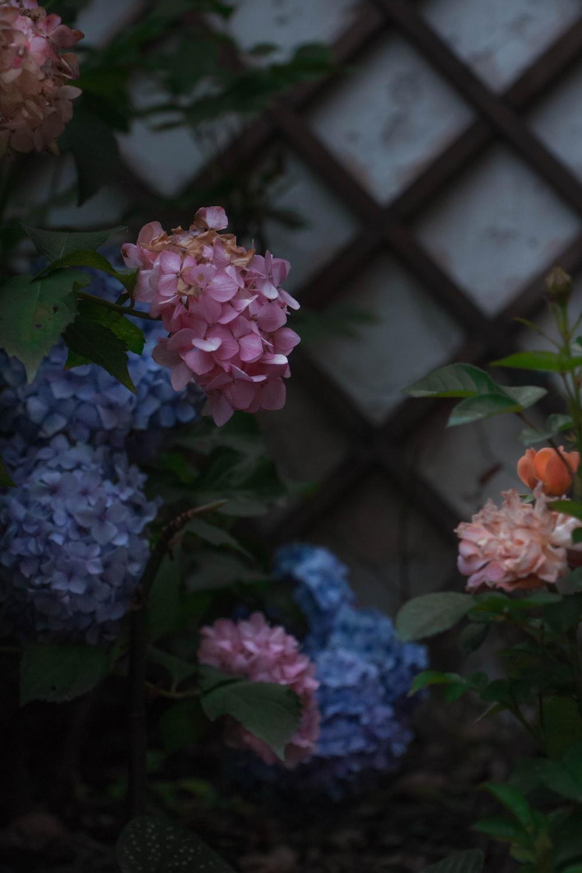 pink and purple flowers in tilt shift lens