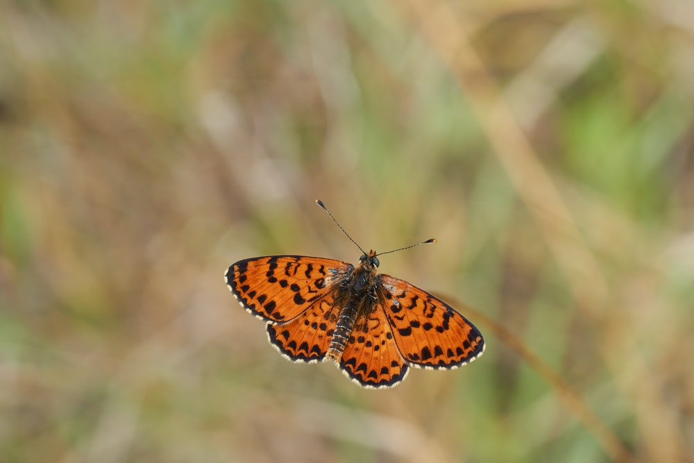 brown and black butterfly on brown stem in tilt shift lens