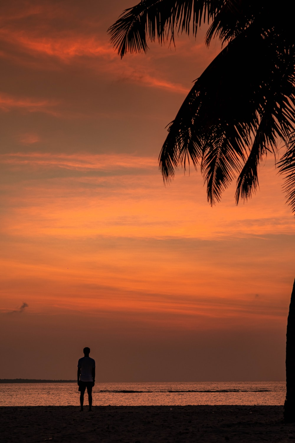 silhouette of man standing near palm tree during sunset