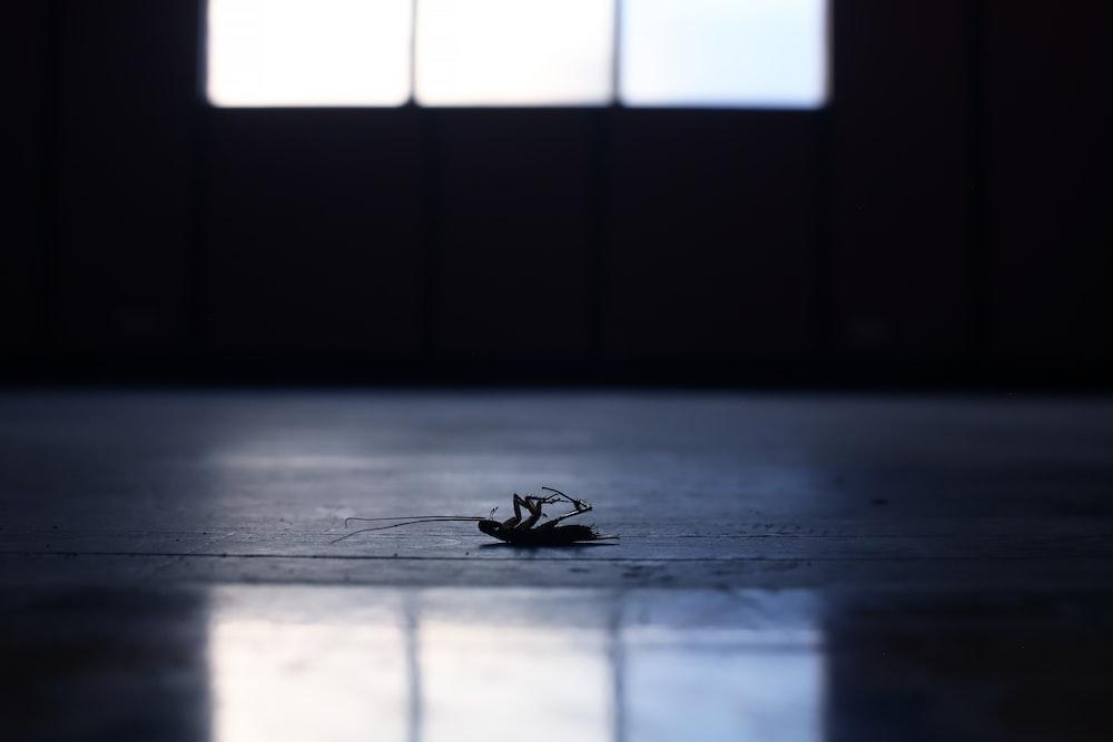 black spider on grey wooden floor
