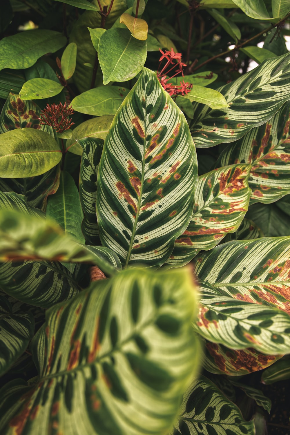 green and red leaves plant