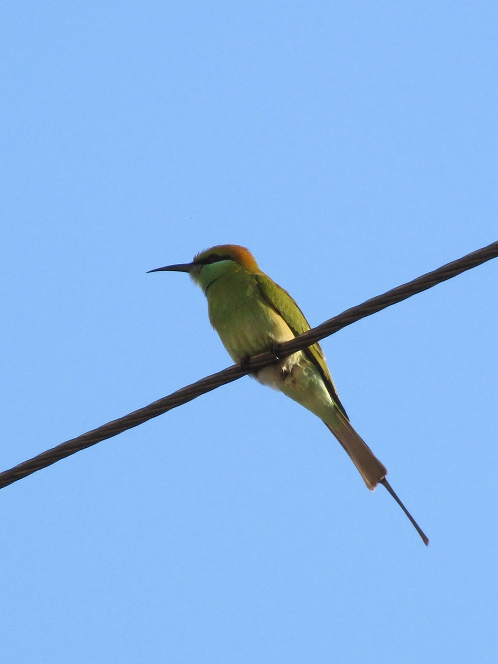 green and brown bird on brown wire during daytime