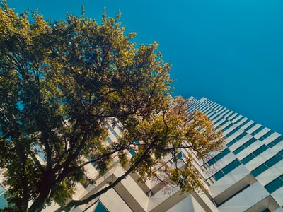 green tree beside white concrete building earth day zoom background