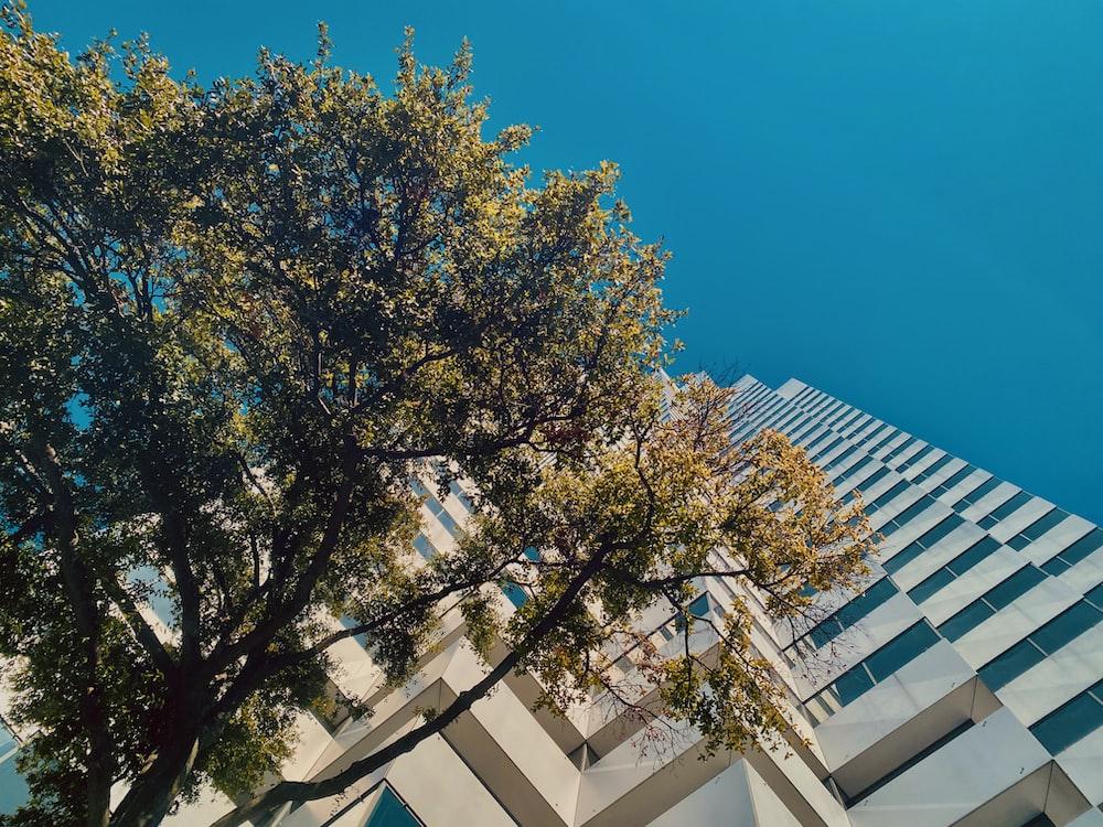 green tree beside white concrete building