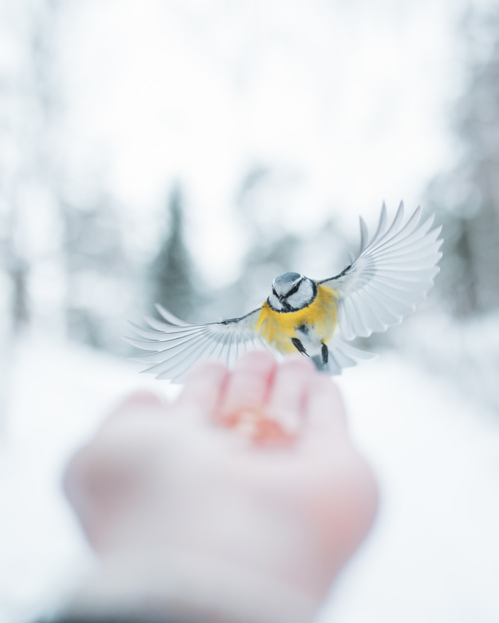 yellow and white bird on persons finger