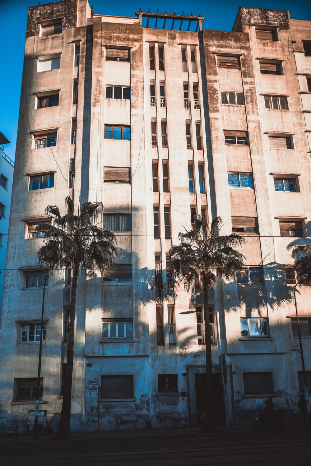 palm tree in front of brown concrete building