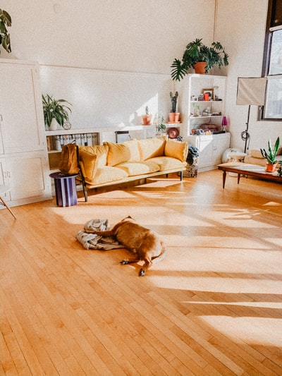 brown short coated dog lying on brown wooden floor