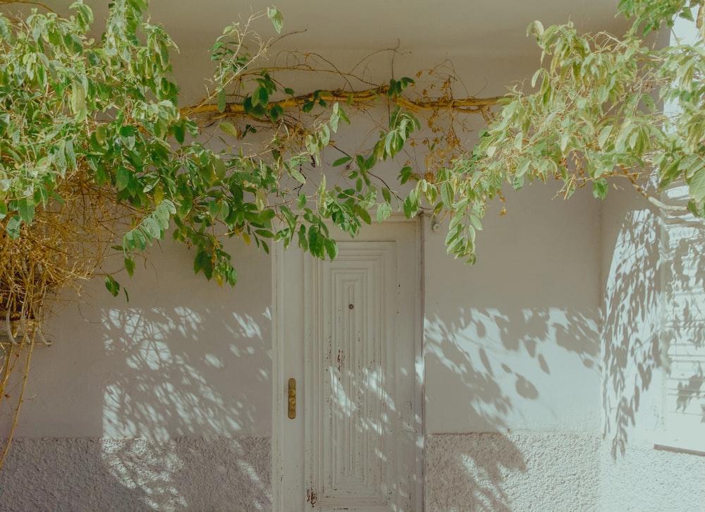 green tree near white wooden door