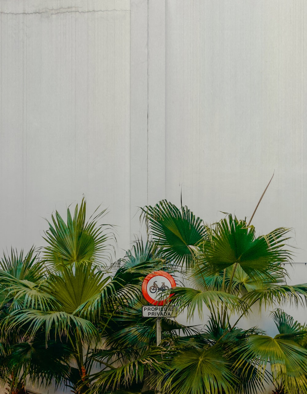 green palm tree beside white wall