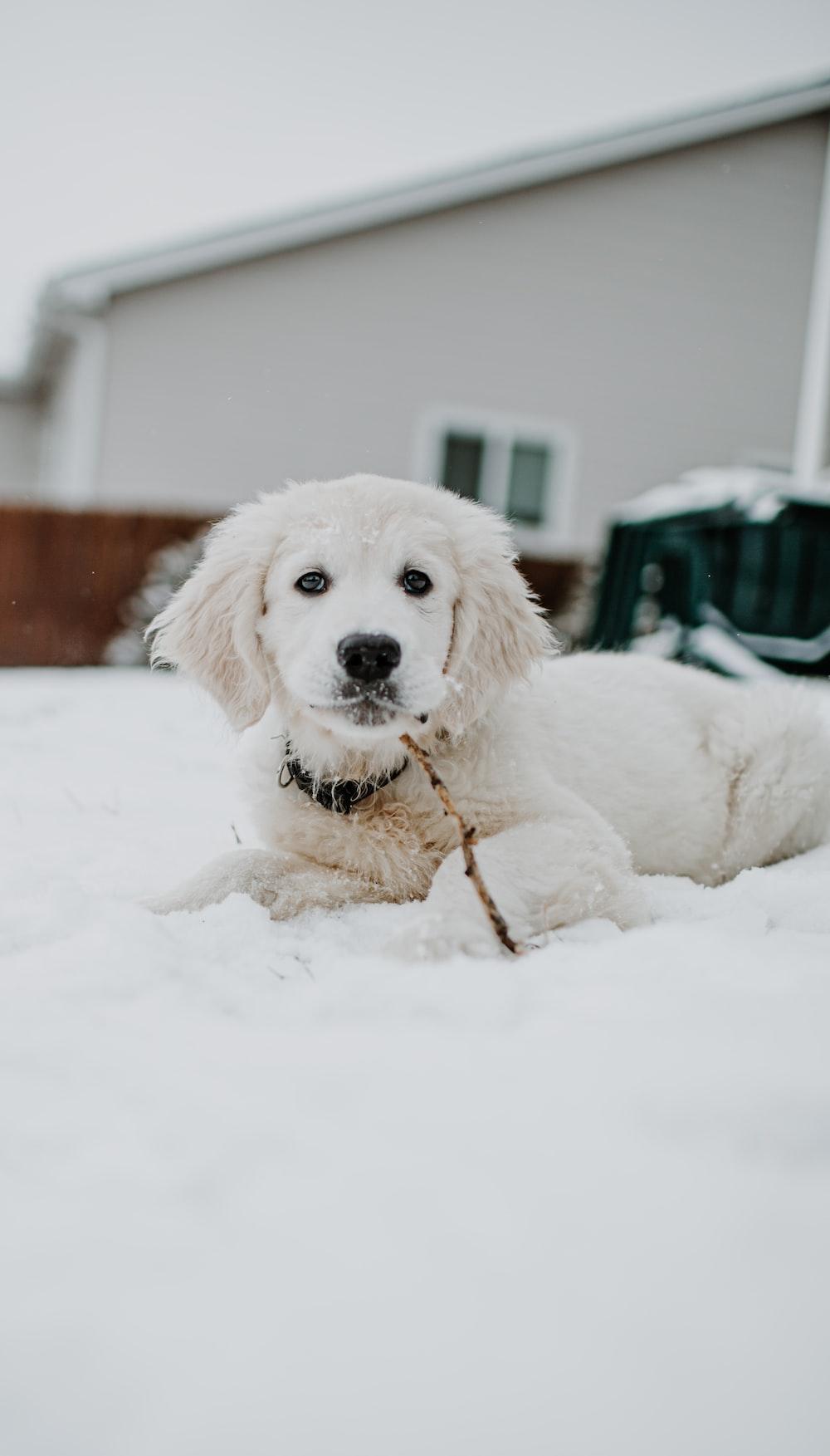 white short coated dog on snow covered ground during daytime
