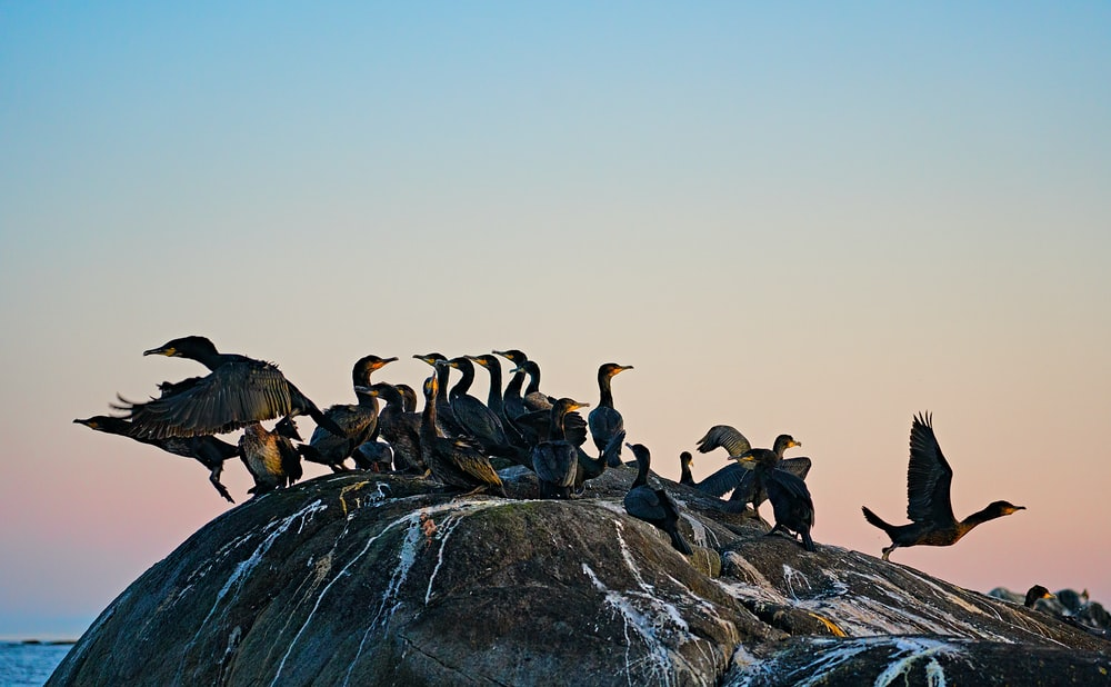 flock of birds on gray rock during daytime