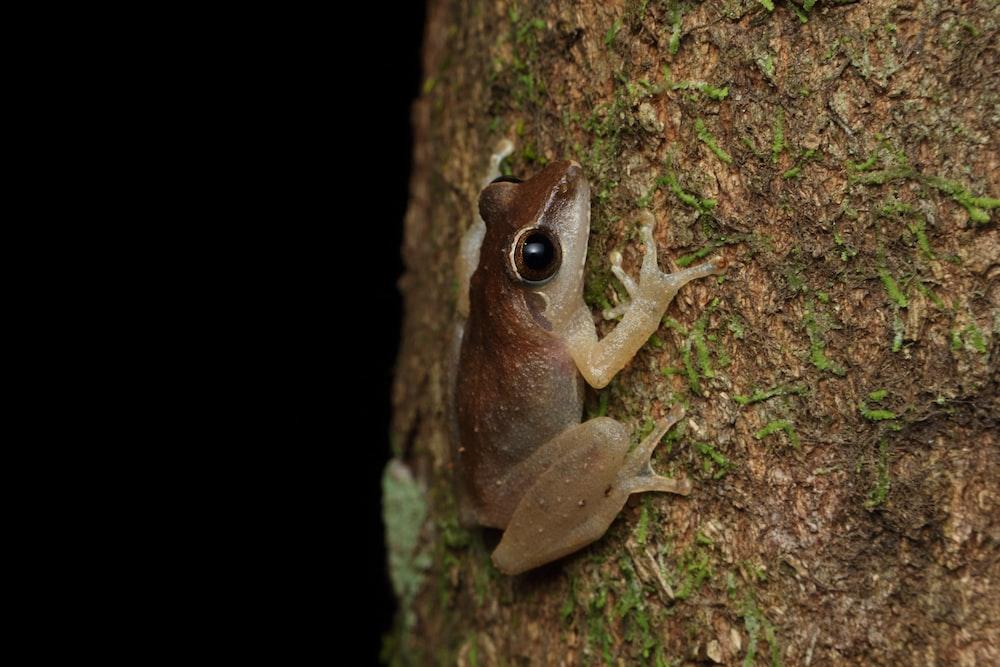 brown frog on brown tree trunk