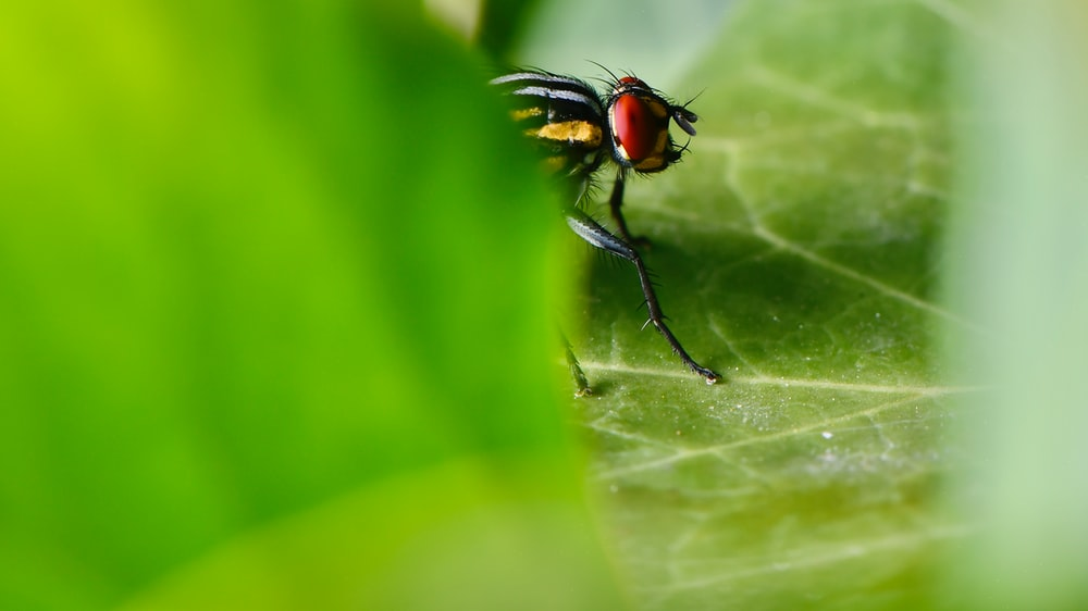 black and red fly perched on green leaf in close up photography during daytime