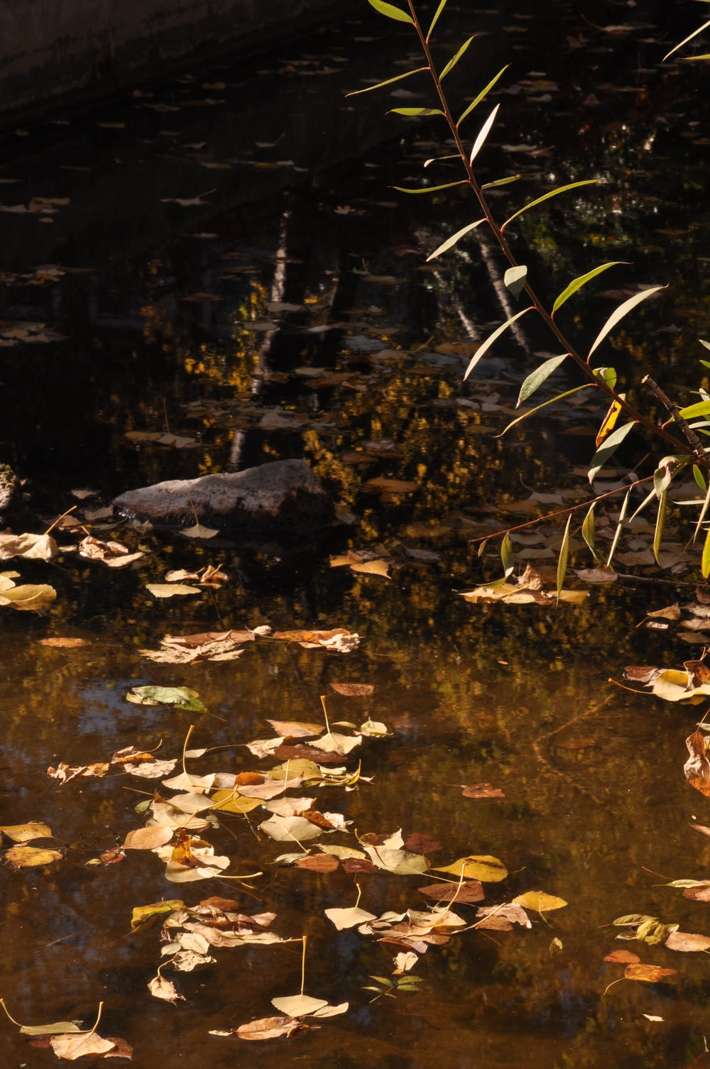 brown leaves on body of water