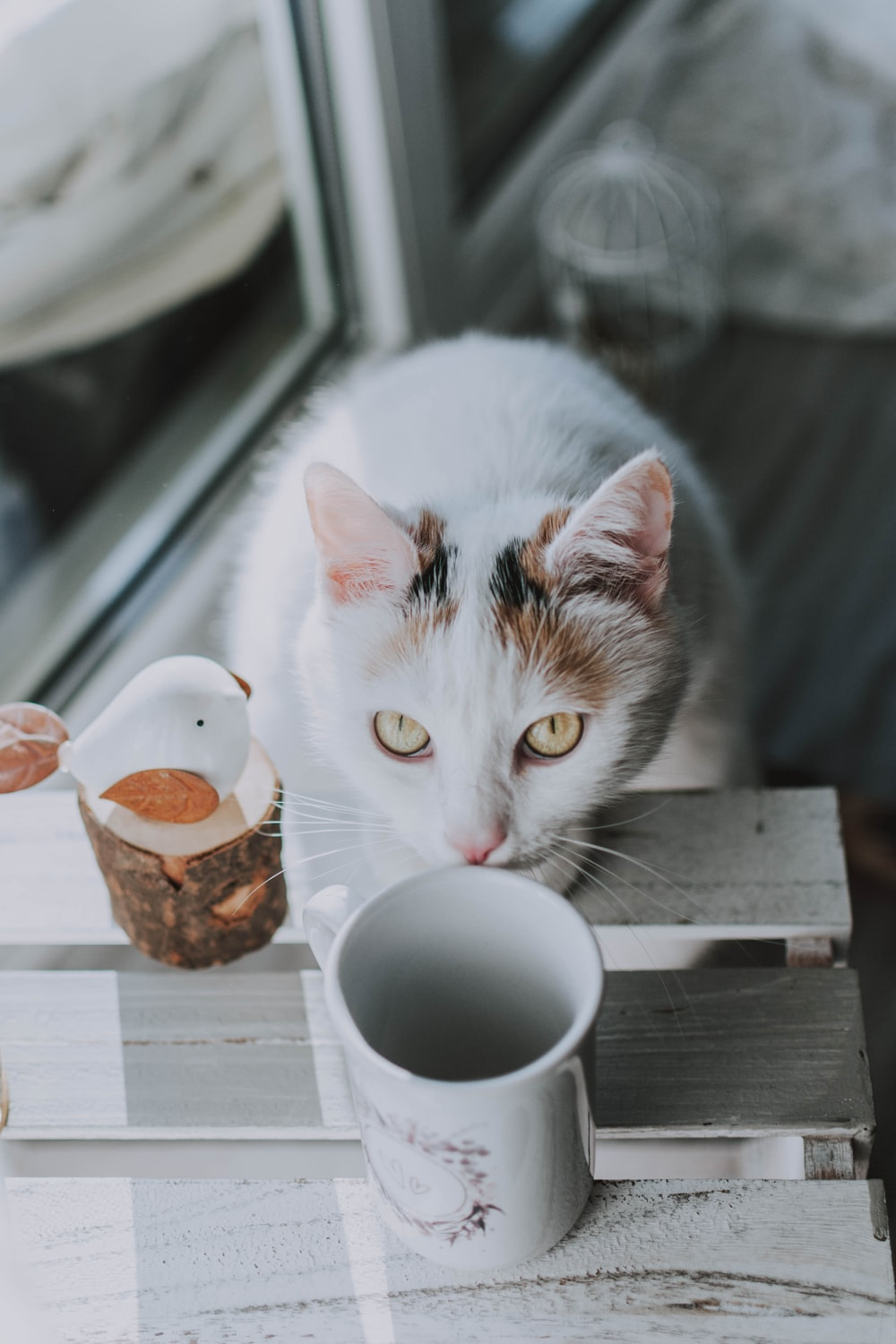white and brown cat on brown wooden table