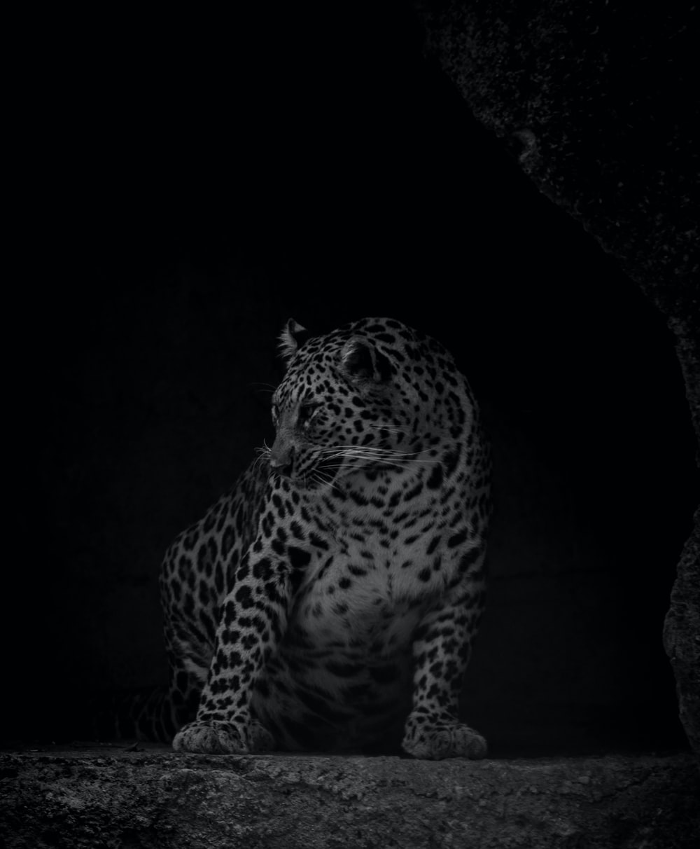 leopard on black cave during night time