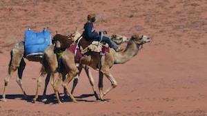 man riding brown camel on brown sand during daytime