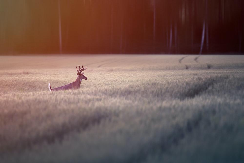 brown deer on gray sand during daytime